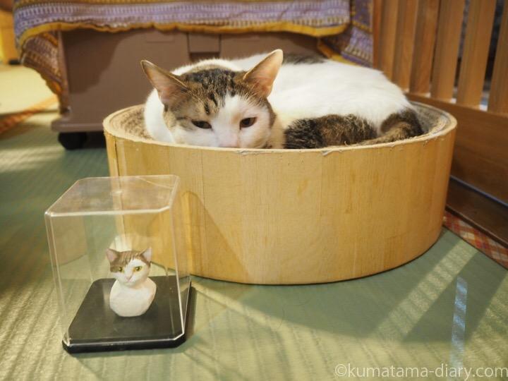 いっちゃんと木彫り猫
