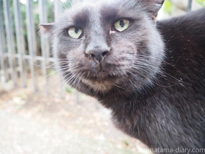 黒猫さんドアップ