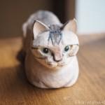 シャムトラの木彫り猫を作りました