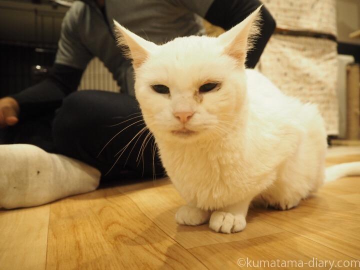 白猫こけももさん