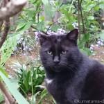 「白山神社」の黒猫さんが目の前でゴロン&スリスリしてくれました♪