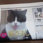 『月刊猫とも新聞』2018年5月号の特集は「猫だまし〜猫さんと嘘〜」です