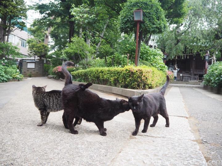 スリスリしあう黒猫さんとキジトラ猫さん