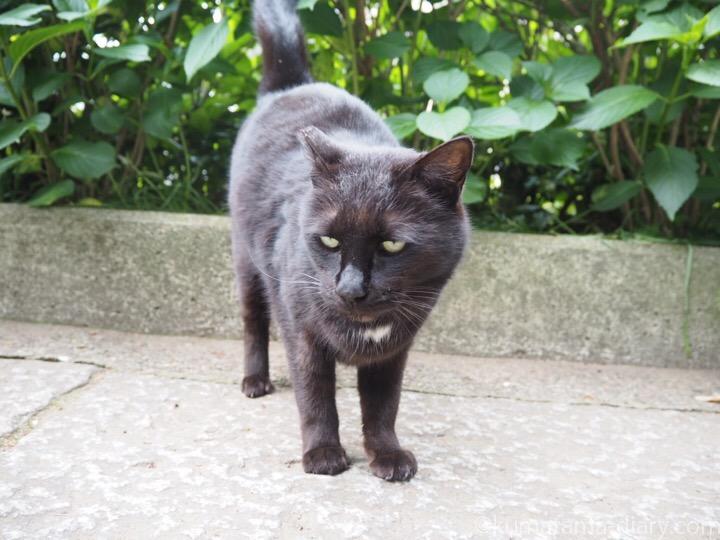 胸元が白い黒猫さん
