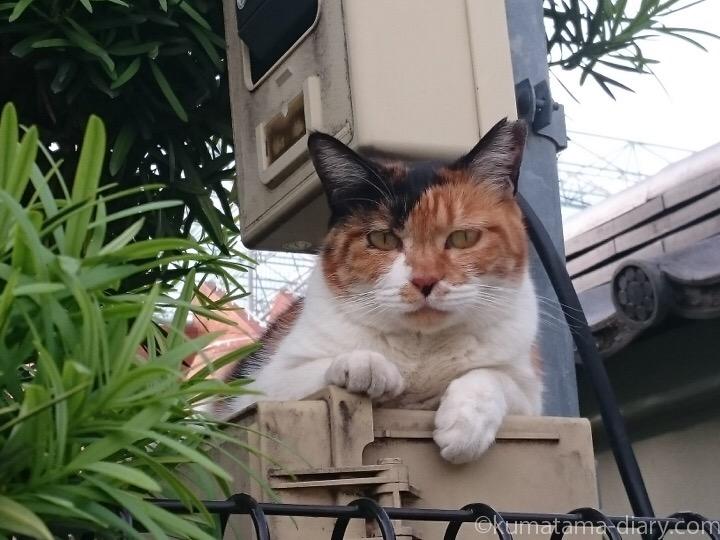 三毛猫さん