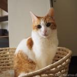 プレミアムキャットフード専門店「tama」のフードで猫の誕生日を祝いました