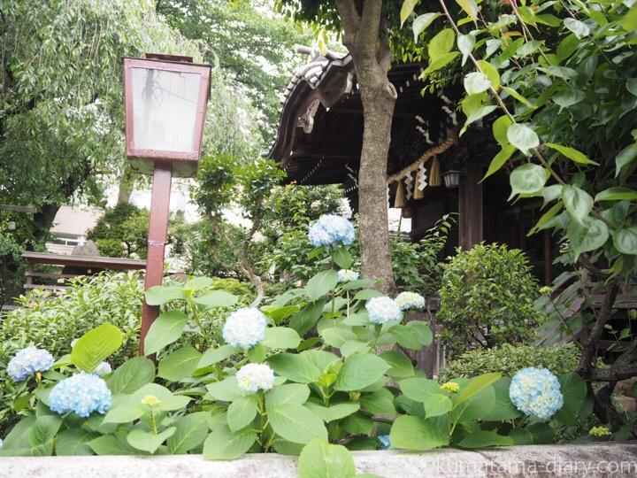 白山神社紫陽花