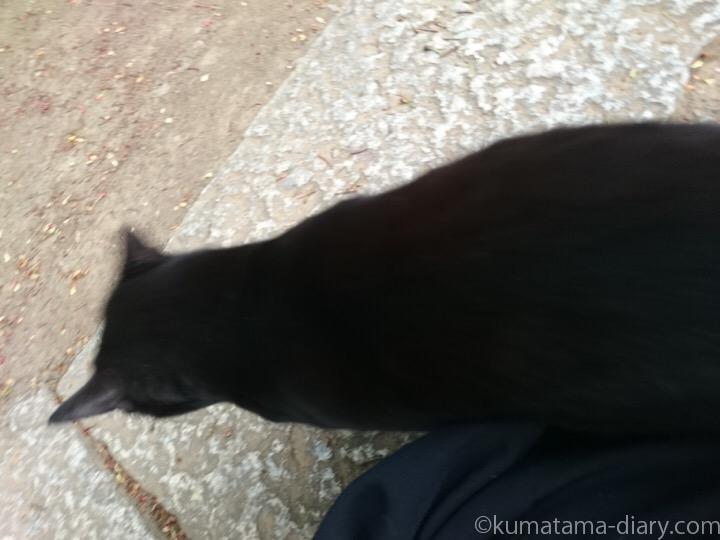 黒猫さんスリスリ