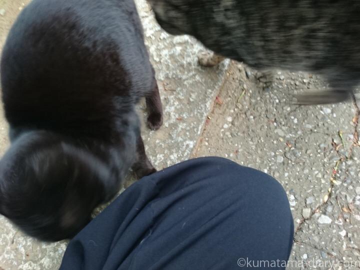 黒猫さんにスリスリされる