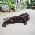 【文京区】お腹の毛が白い「白山神社」の黒猫さんたち