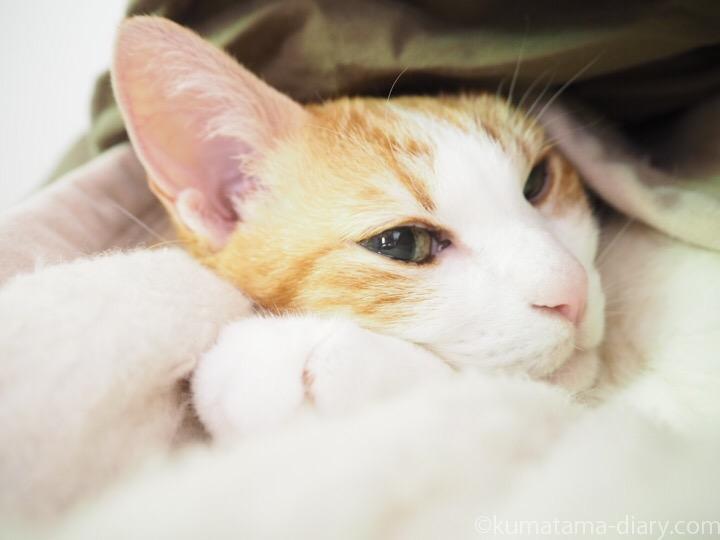 毛布に潜るたまき