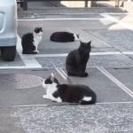 サイクリング中に新大久保で見かけた猫さんたち