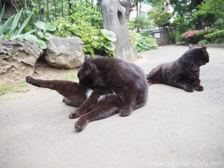 お腹が白い黒猫さん