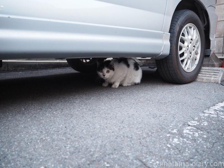 車の下の白黒猫さん