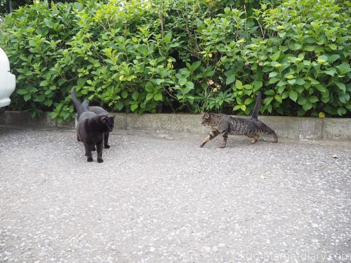 2匹の黒猫さんとキジトラ猫さん