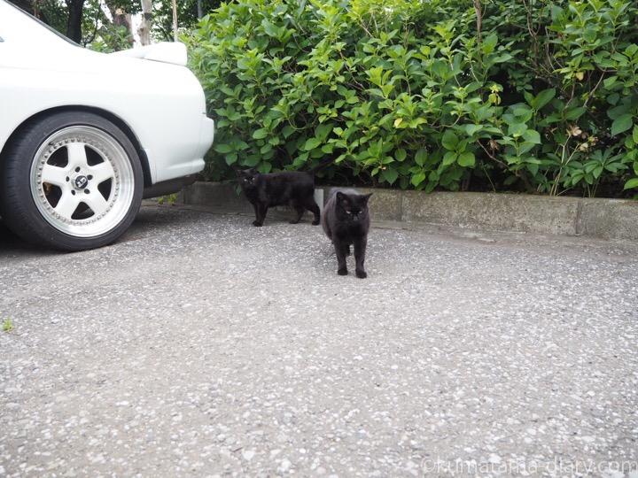 2匹の黒猫さん