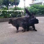 【文京区】頭と体をスリスリし合う白山神社の猫さんたち