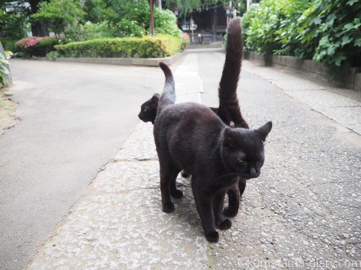 スリスリし合う黒猫さん
