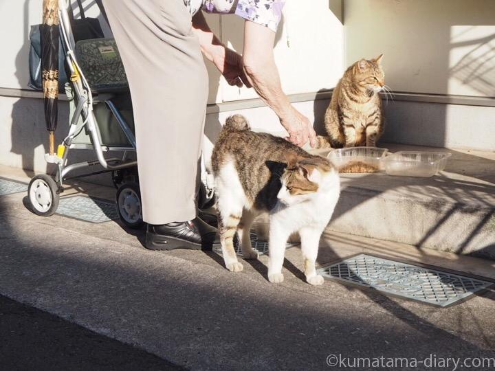 おばあさんにエサをもらう猫さん