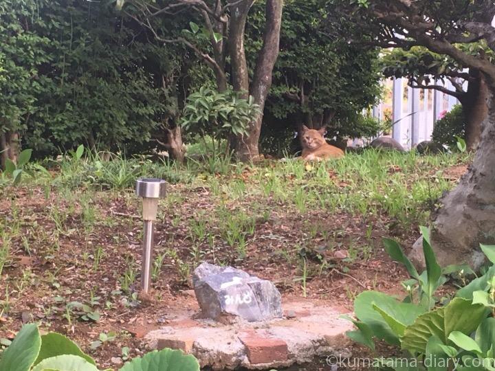 墓を見守る茶トラ白猫さん