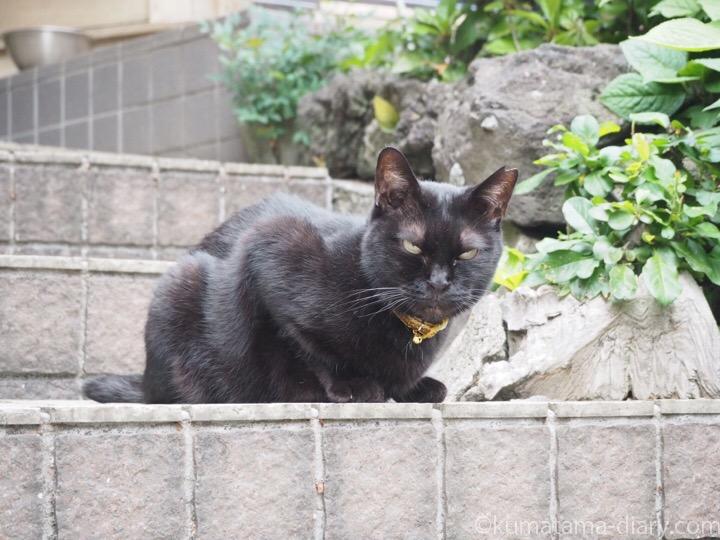 ゴールドの首輪の黒猫さん