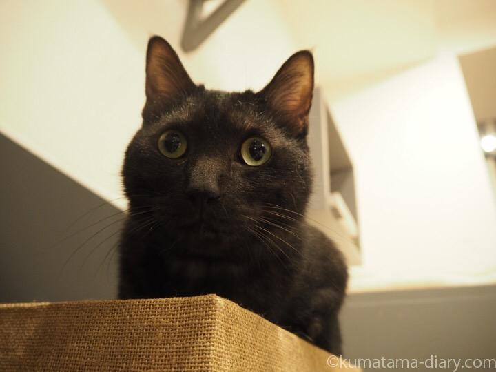 黒猫クロまるくん