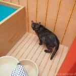 【両国】猫湯を探検する「江戸ねこ茶屋」の猫さん