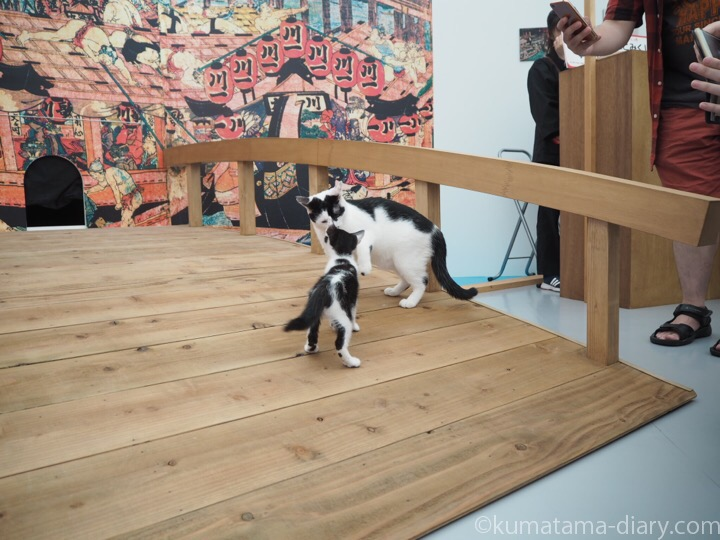 黒白猫さんと白黒猫さん