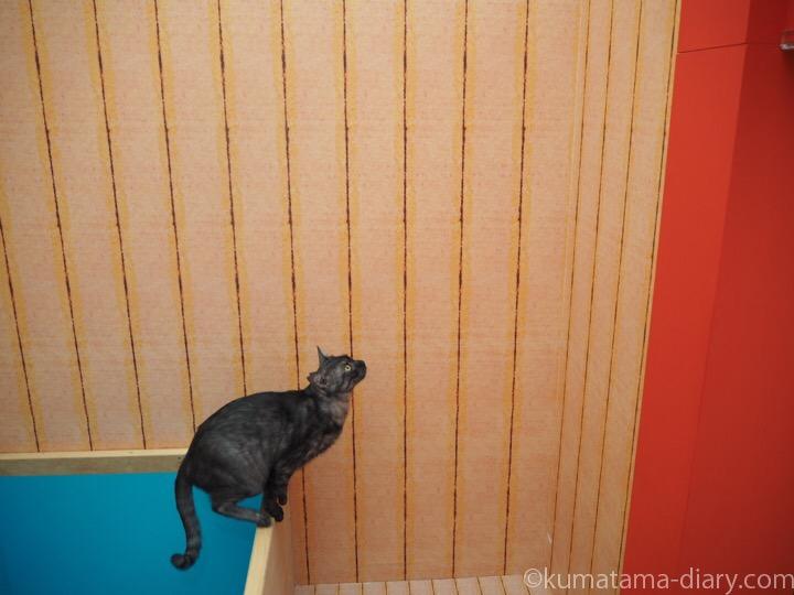 ジャンプ直前の猫さん