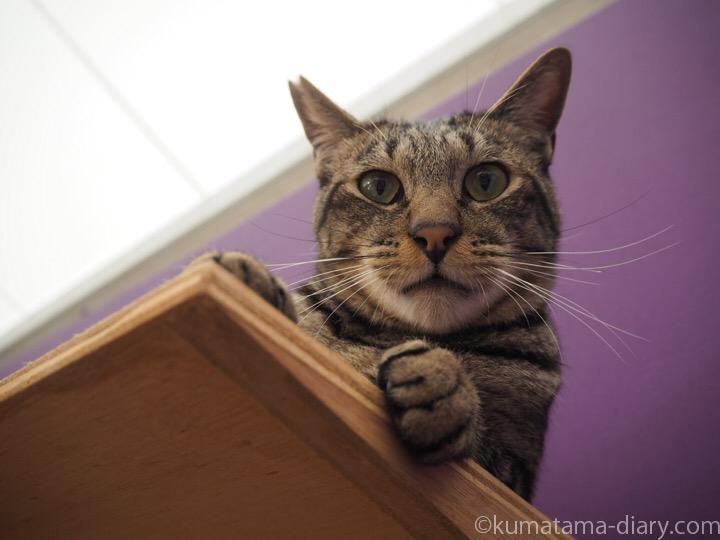 キジトラ猫さん顔