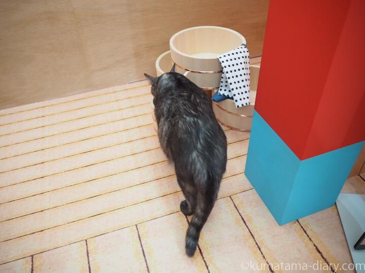 桶をぬおう猫さん