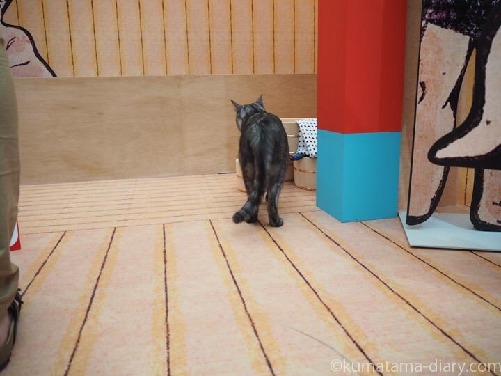 猫湯を探検する猫さん