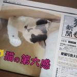 『月刊猫とも新聞』2018年6月号の特集は「猫の第六感」です
