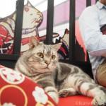 【江戸ねこ茶屋】猫カフェで眠ると猫さんが寄ってきます
