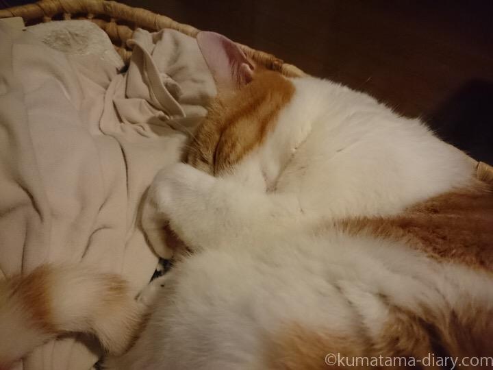 かごで寝るたまき