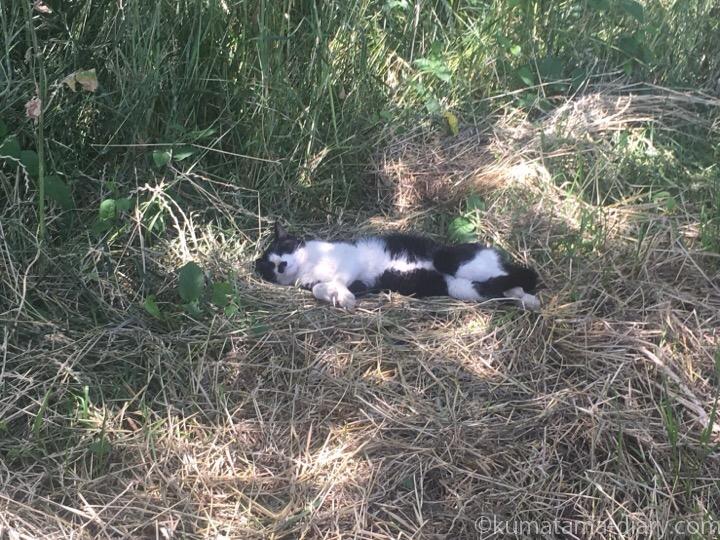 河川敷の黒白猫さん
