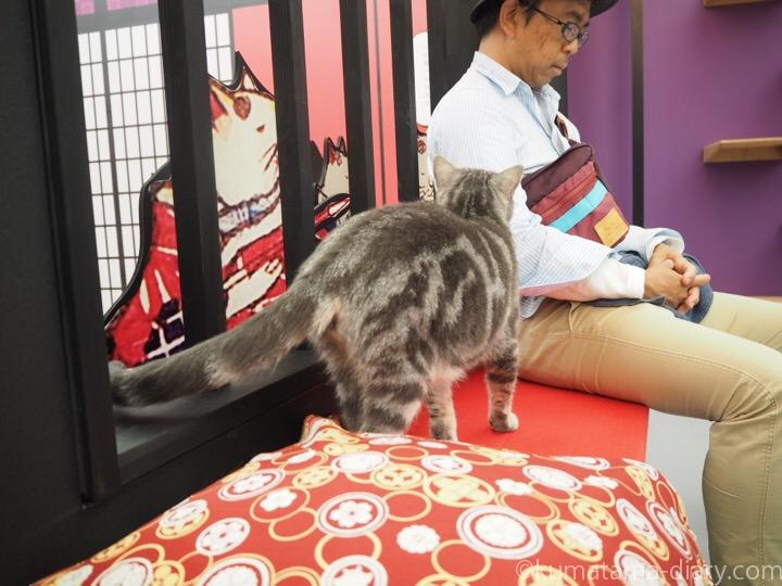 彼の隣にやってきた猫さん