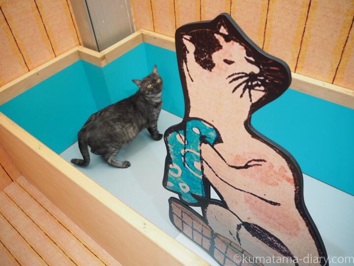 猫湯に入る猫さん