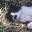 河川敷の黒白猫さんアップ
