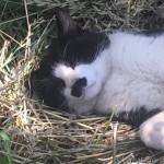 河川敷で熟睡していた黒白猫さん