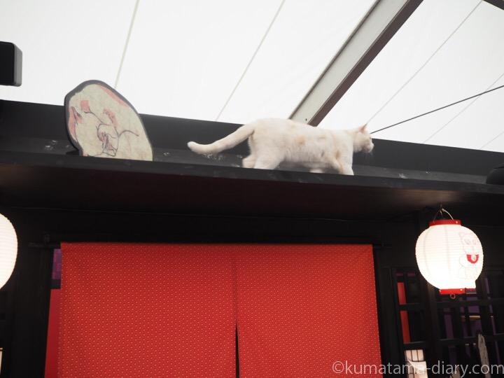 着地した猫さん