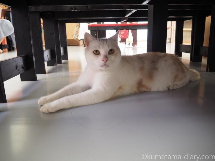 江戸ねこ茶屋猫さん