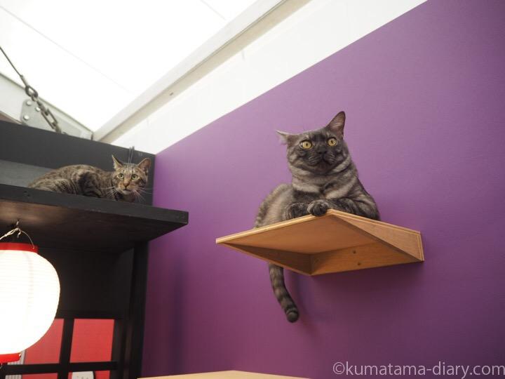 江戸ねこ茶屋の猫さん
