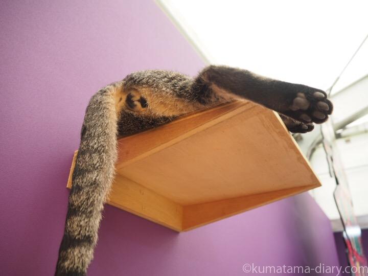 キジトラ猫さんお尻