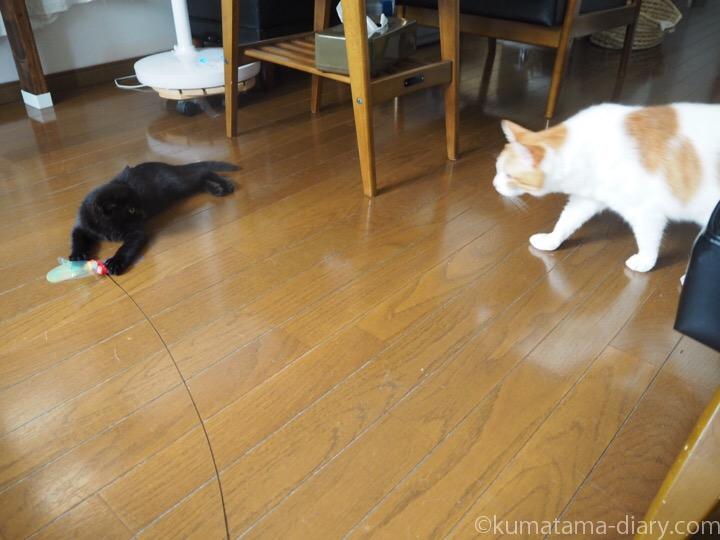 たまきと子猫