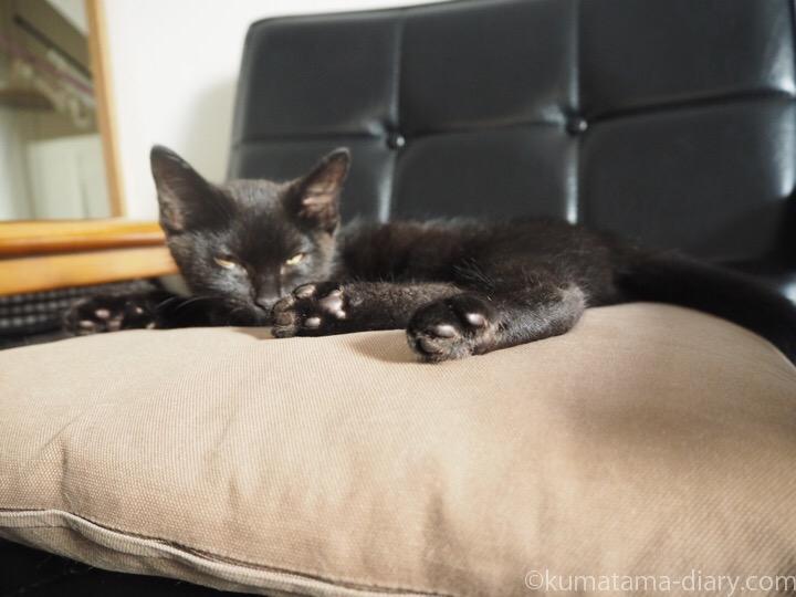 眠る黒猫子猫