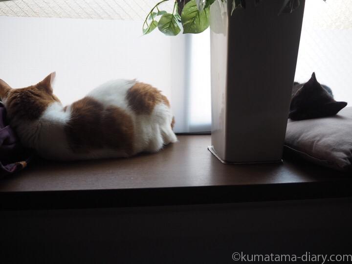出窓で寝るたまきとふみお