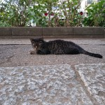 白山神社の猫さんに話しかけているところを見られてしまいました