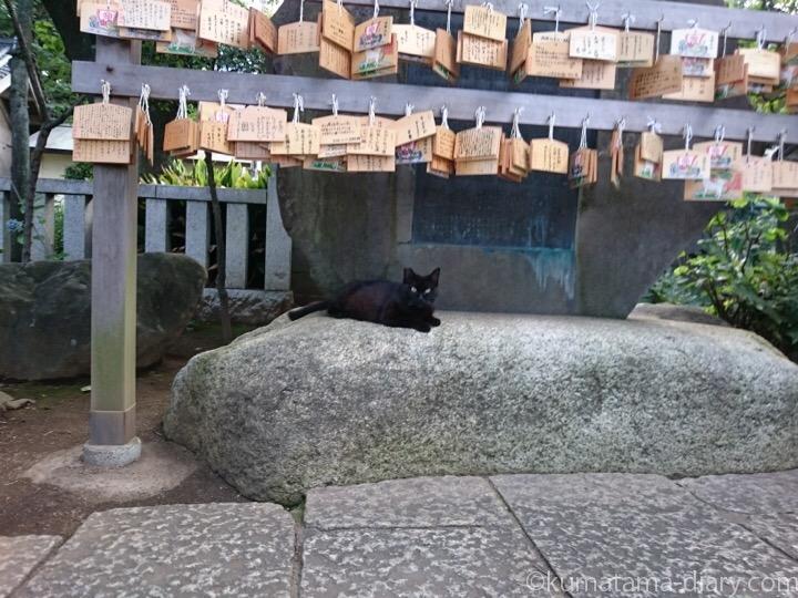 絵馬と黒猫さん