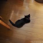 お腹の上でふみふみする子猫の動画